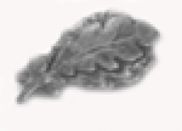 Oak Leaf Cluster - Silver – 5/16 inch